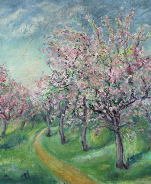 Cerisiers en fleurs au Houlme