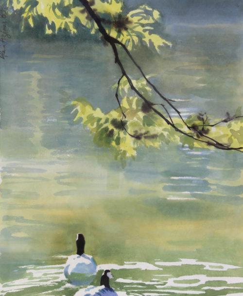 Les canards sur l'eau