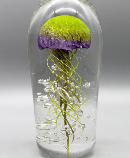 Méduse verte et violette